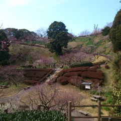 various plum, cherry blossom, and narcissus gardens decorate the park